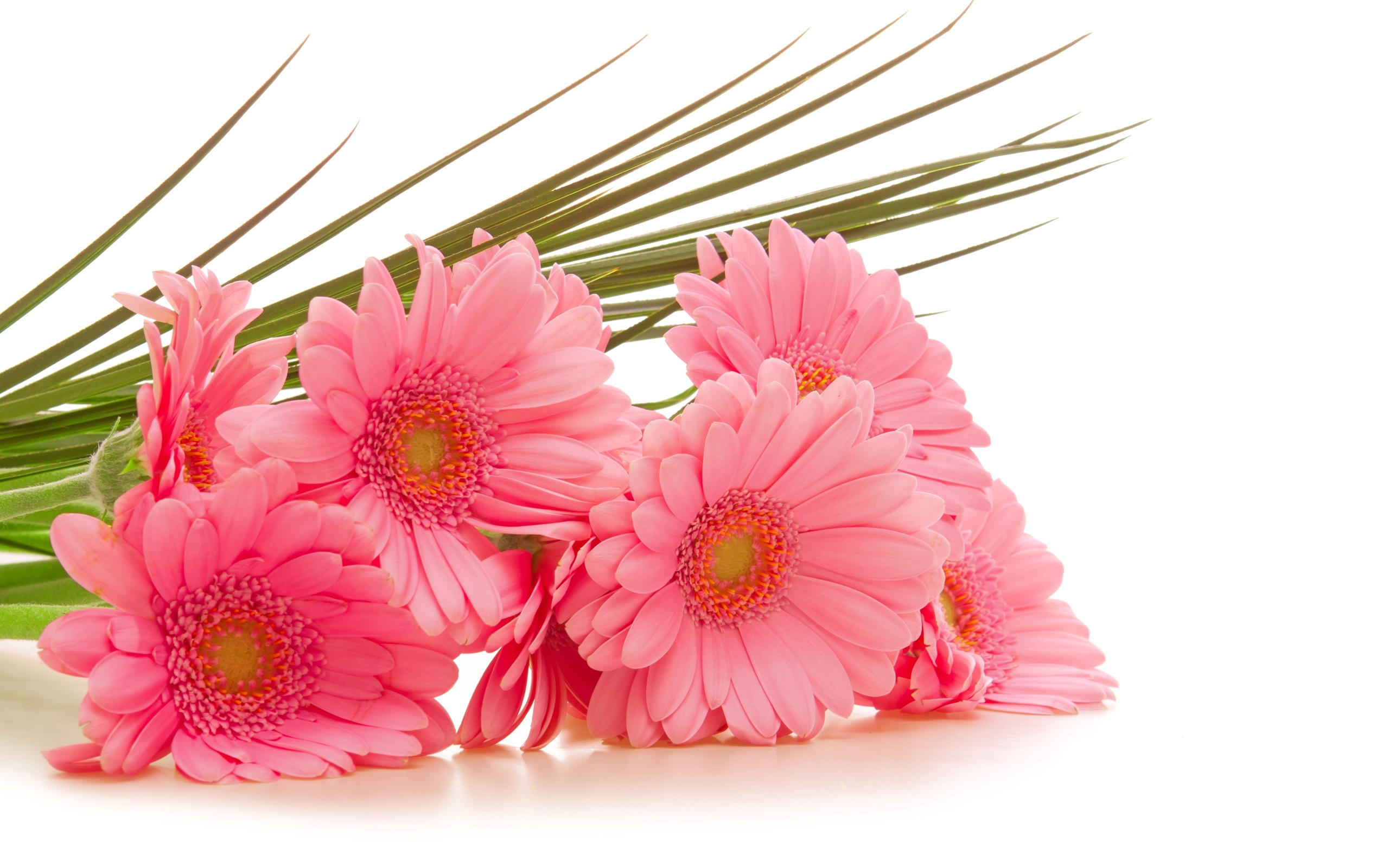 114 gerbera hd wallpapers backgrounds wallpaper abyss - Bunch of roses hd images ...