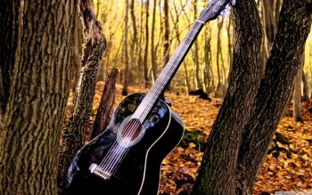 Music - Guitar Wallpapers and Backgrounds ID : 435926