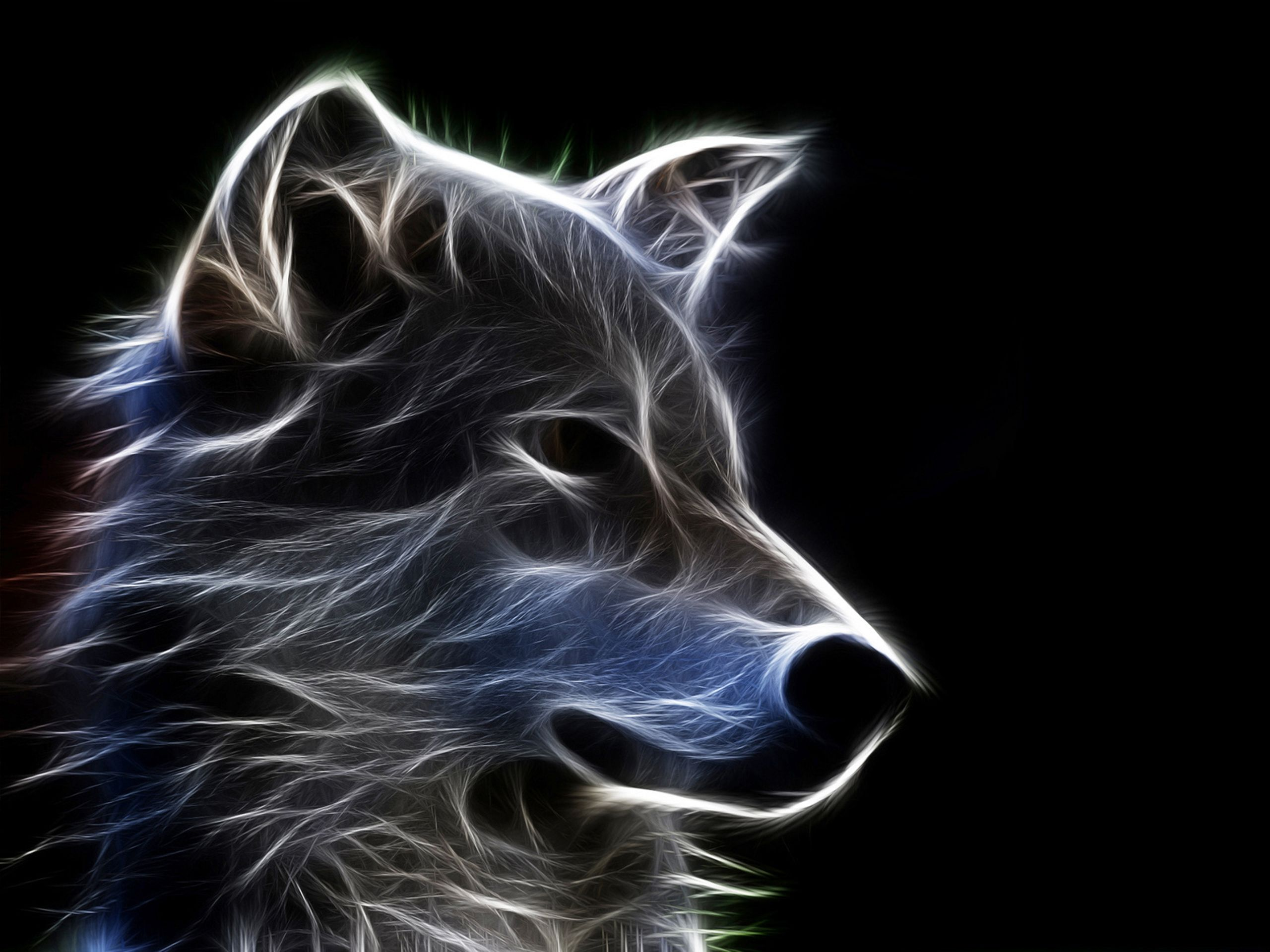 wolf wallpapers ndash animal - photo #32