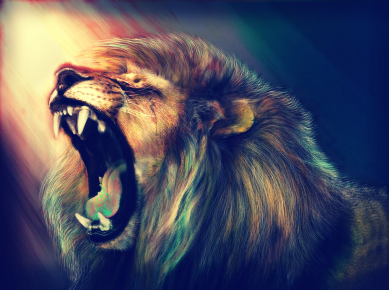 Best 25 Lion Hd Wallpaper Ideas On Pinterest: Löwe Wallpaper And Hintergrund