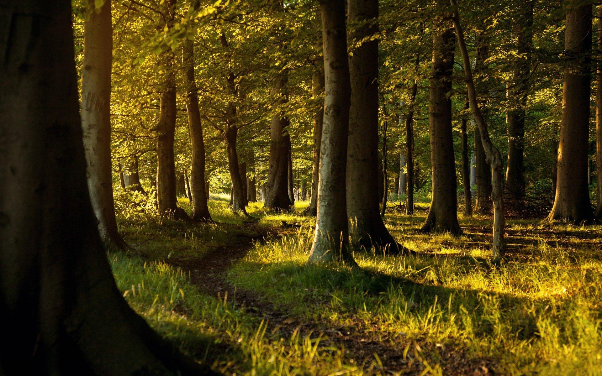 Wald Hd Wallpaper Hintergrund 1920x1200 Id 436445