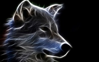 1054 Wolf Hd Wallpapers Background Images Wallpaper Abyss