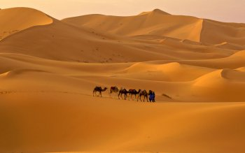 Photography - Sahara Wallpapers and Backgrounds ID : 436659