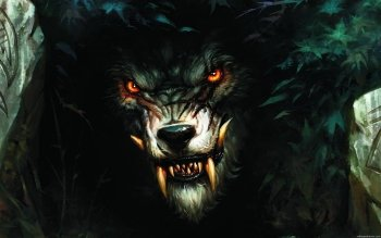 Donker - Werewolf Wallpapers and Backgrounds ID : 437150
