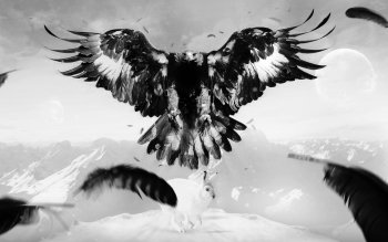 Animal - Eagle Wallpapers and Backgrounds ID : 437584