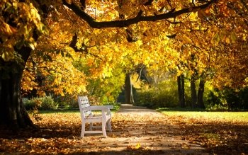 Man Made - Bench Wallpapers and Backgrounds ID : 438097