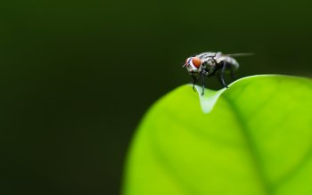 Animalia - Fly Wallpapers and Backgrounds ID : 438957