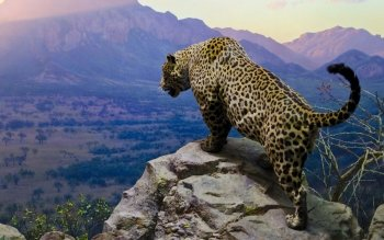 Animalia - Jaguar Wallpapers and Backgrounds ID : 439850