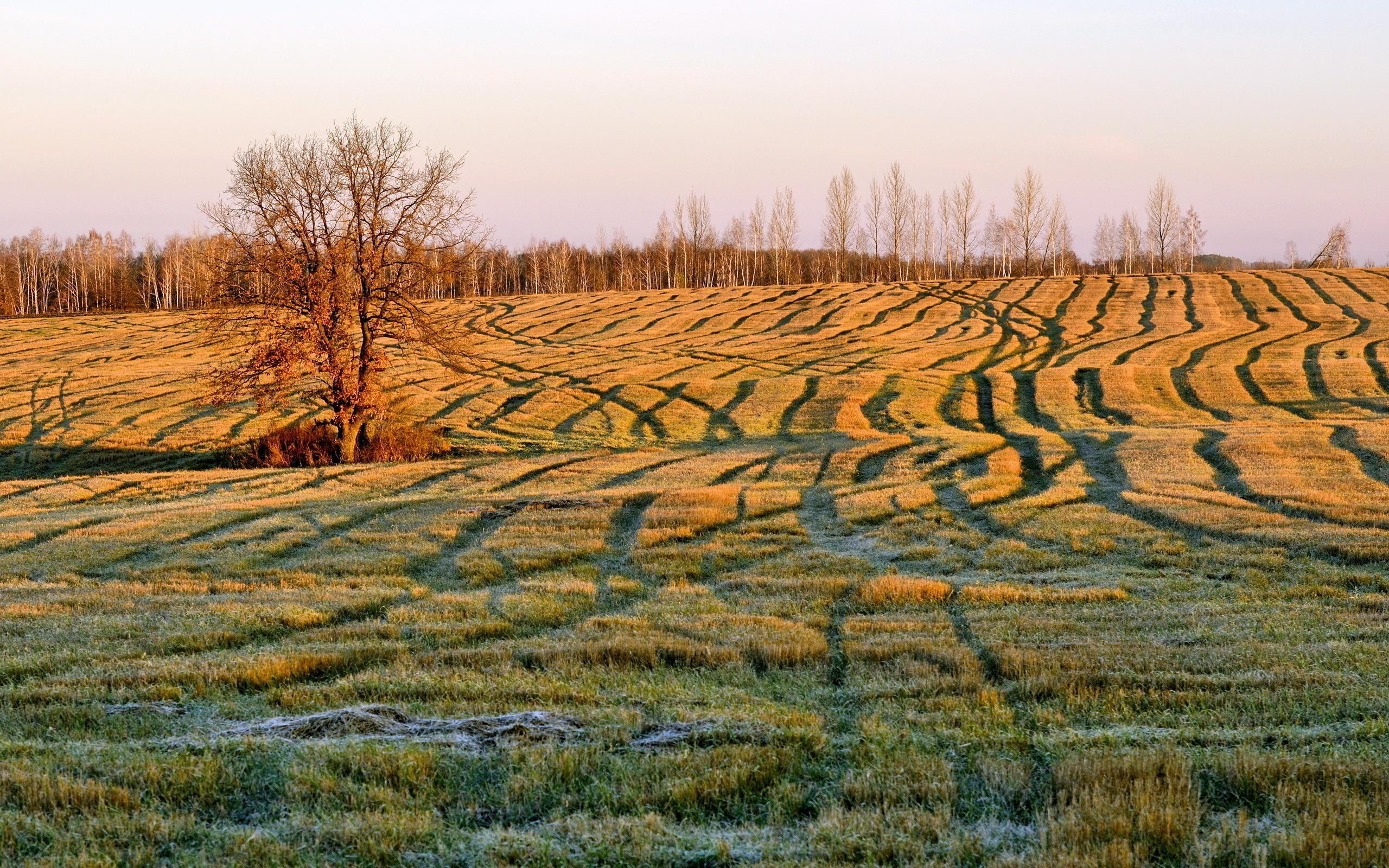 field 2560x1600 2616 - photo #21