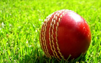 Deporte - Cricket Wallpapers and Backgrounds ID : 442882
