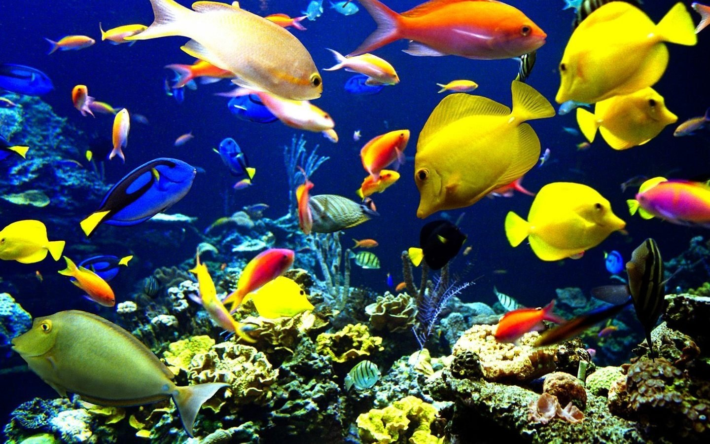 Download 9000 Wallpaper Abyss Fish HD Paling Baru