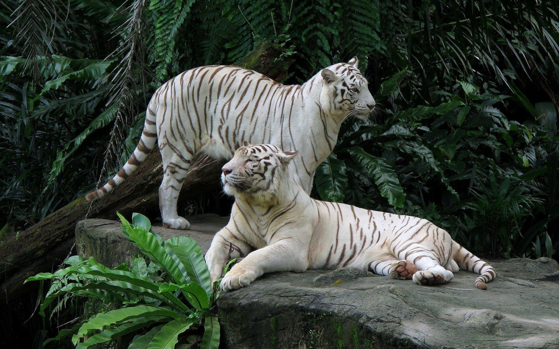 Must see Wallpaper Marvel White Tiger - thumb-1920-443944  Photograph_451639.jpg