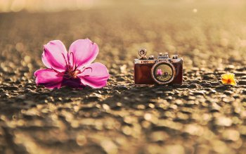 Photography - Artistic Wallpapers and Backgrounds ID : 443258