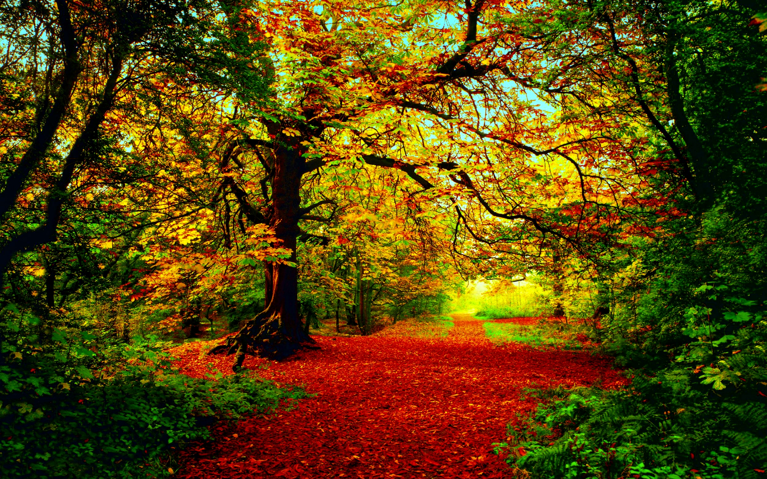 Herfst Full Hd Wallpaper And Achtergrond 2560x1600 Id Most Beautiful Background Color Image