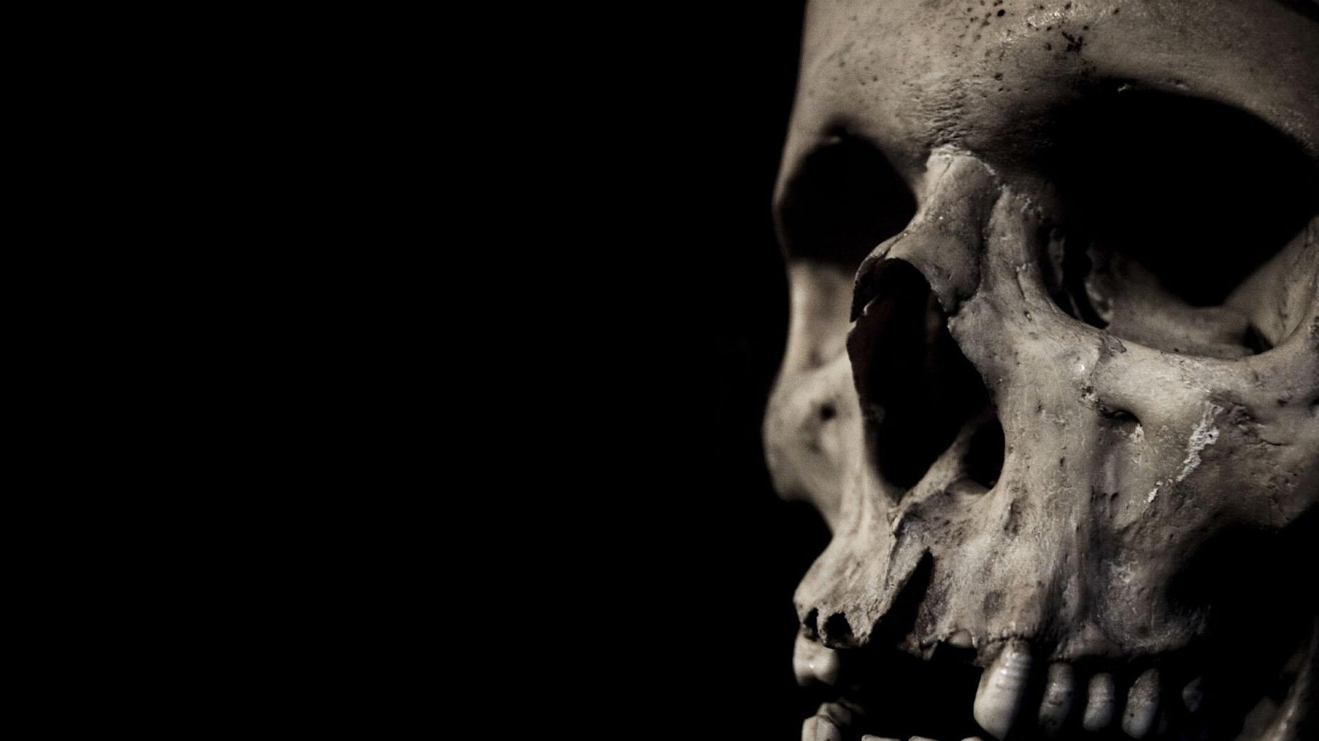 Skull Full HD Wallpaper And Background Image