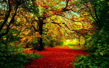 Earth - Autumn Wallpapers and Backgrounds ID : 444086