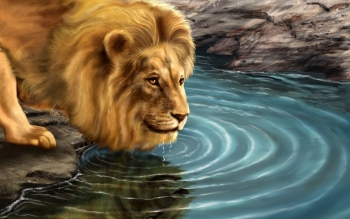 Dierenrijk - Lion Wallpapers and Backgrounds ID : 445327
