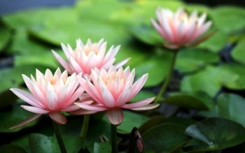 Earth - Lotus Wallpapers and Backgrounds ID : 449508