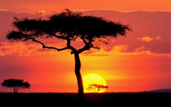 Earth - Tree Wallpapers and Backgrounds ID : 451544