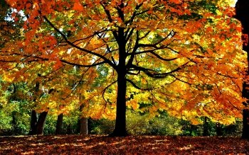 Earth - Autumn Wallpapers and Backgrounds ID : 452044