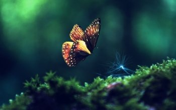 Animal - Butterfly Wallpapers and Backgrounds ID : 453376