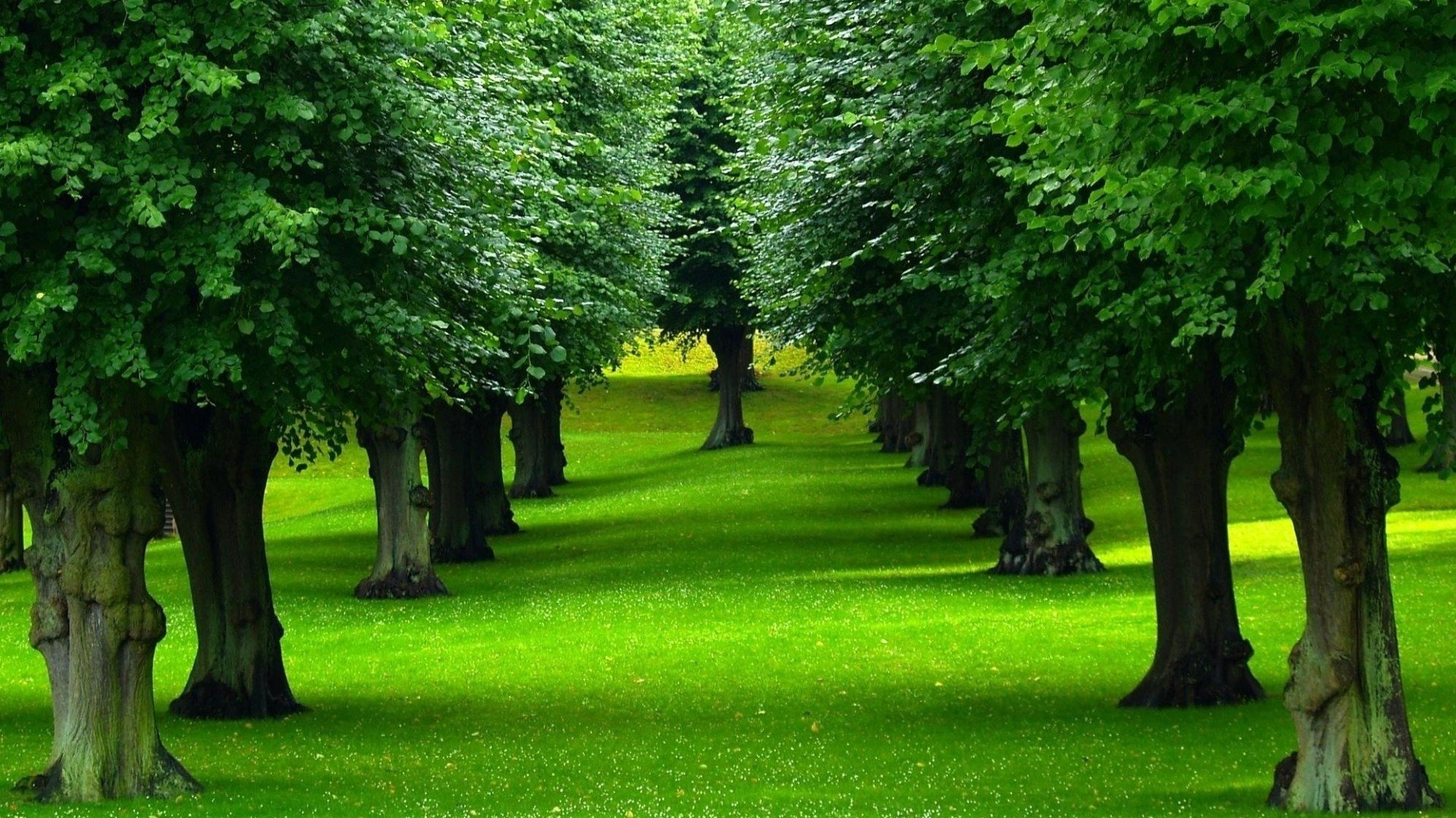 Earth - Tree  Earth Green Wallpaper