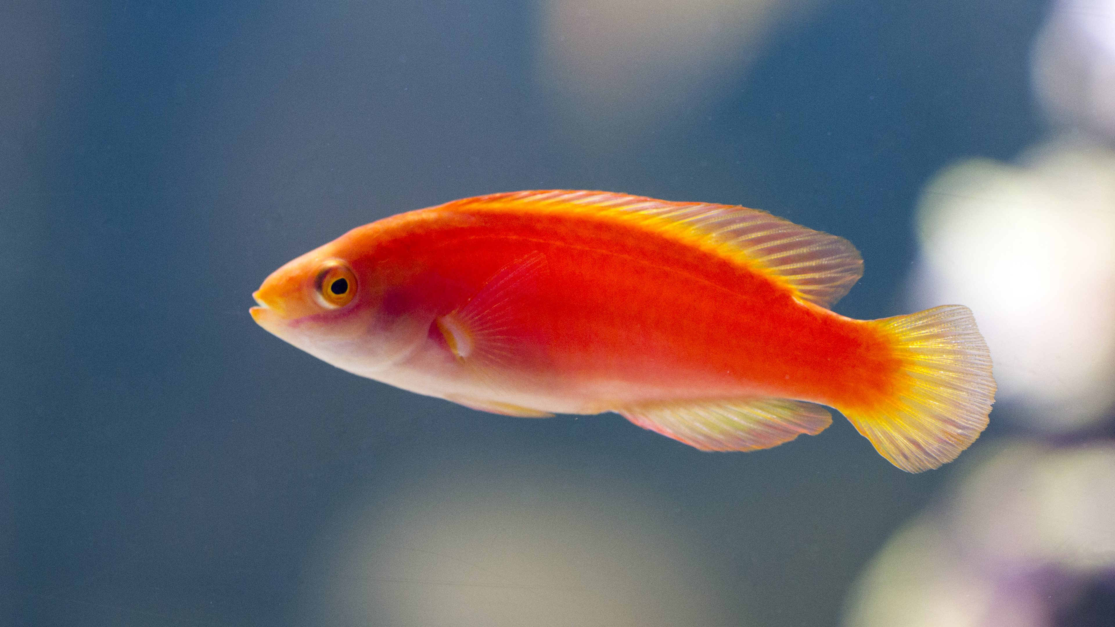 515 Fish HD Wallpapers | Background Images - Wallpaper Abyss - Page 3