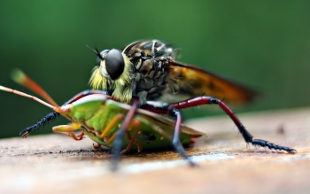 Animal - Insect Wallpapers and Backgrounds ID : 458316