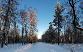 Земля - Winter Wallpapers and Backgrounds ID : 458786