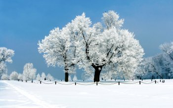 Earth - Winter Wallpapers and Backgrounds ID : 464640