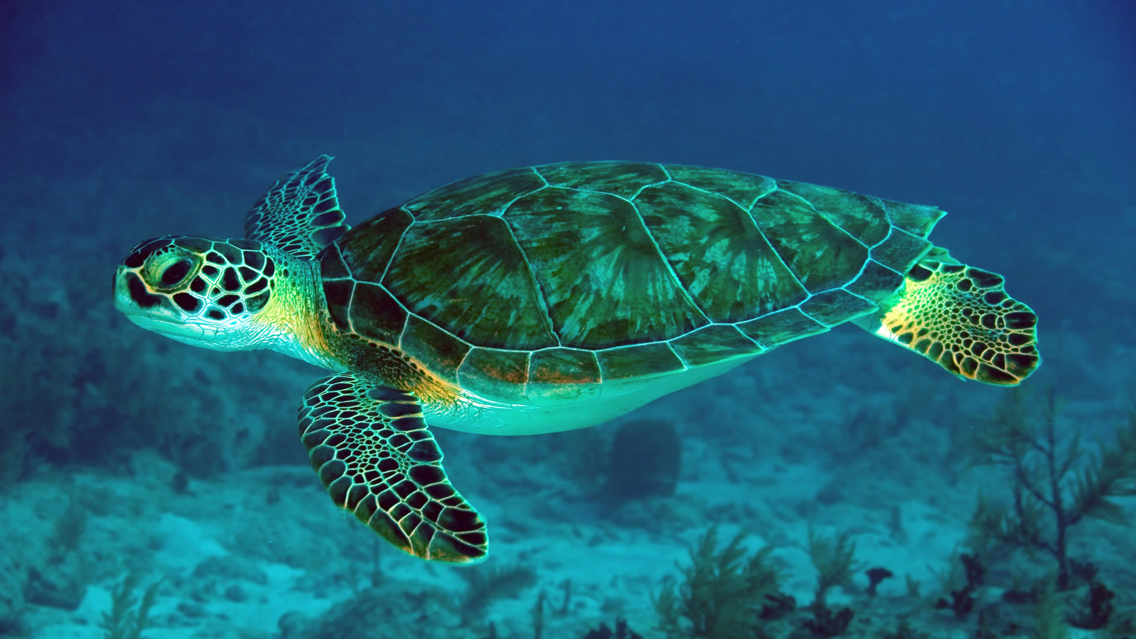 9 Sea Turtle Hd Wallpapers Background Images Wallpaper Abyss