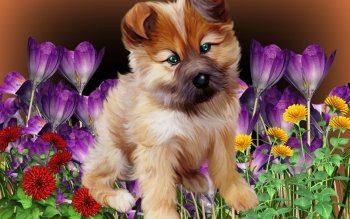 Artistic - Dog Wallpapers and Backgrounds ID : 467229