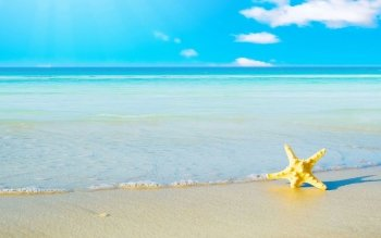 Animal - Starfish Wallpapers and Backgrounds ID : 468943