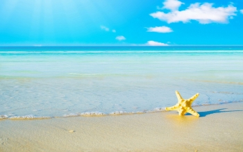 Animal - Starfish Wallpapers and Backgrounds ID : 470596