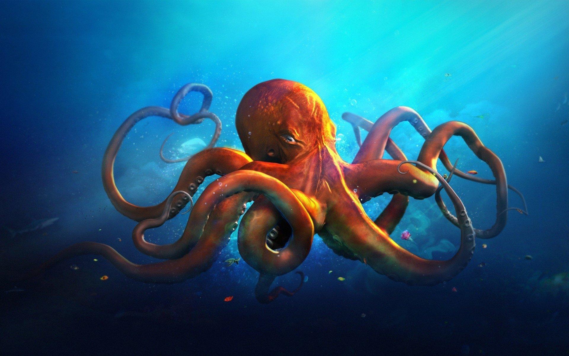 27 Octopus HD Wallpapers