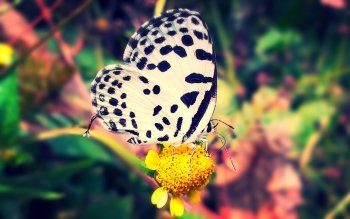 Animal - Butterfly Wallpapers and Backgrounds ID : 476807