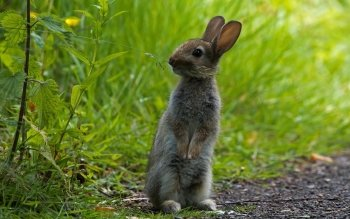 Animal - Rabbit Wallpapers and Backgrounds ID : 480810