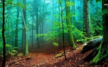 Erde - Wald Wallpapers and Backgrounds ID : 481170