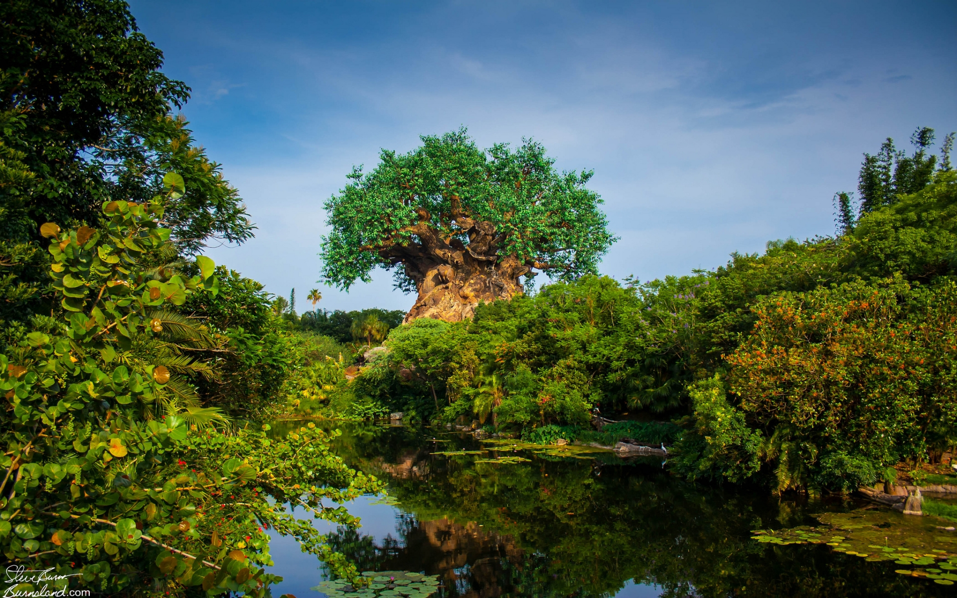 Animal Kingdom Computer Wallpapers, Desktop Backgrounds  1920x1200