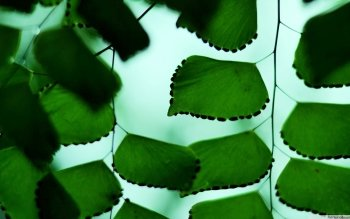 Earth - Leaf Wallpapers and Backgrounds