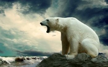 Animal - Polar Bear Wallpapers and Backgrounds ID : 487596
