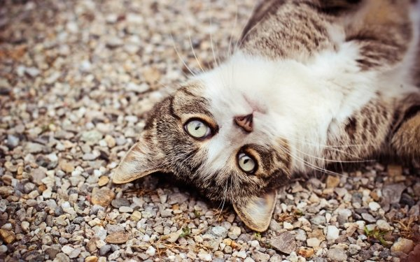 Animal Cat Cats HD Wallpaper   Background Image
