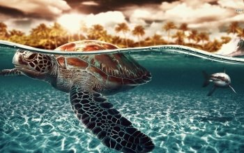 Djur - Turtle Wallpapers and Backgrounds ID : 490621