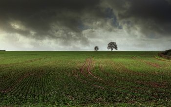 Earth - Field Wallpapers and Backgrounds ID : 491186