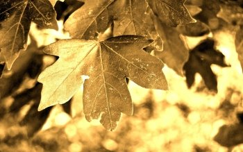 Earth - Leaf Wallpapers and Backgrounds ID : 492164