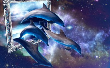 Animal - Dolphin Wallpapers and Backgrounds ID : 501170