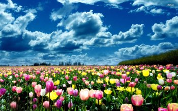 Earth - Tulip Wallpapers and Backgrounds ID : 501722