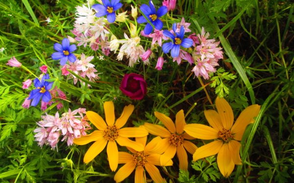 Earth Flower Flowers Nature HD Wallpaper   Background Image