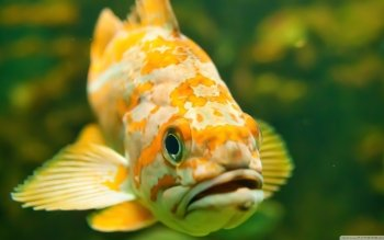 Animal - Fish Wallpapers and Backgrounds ID : 502644