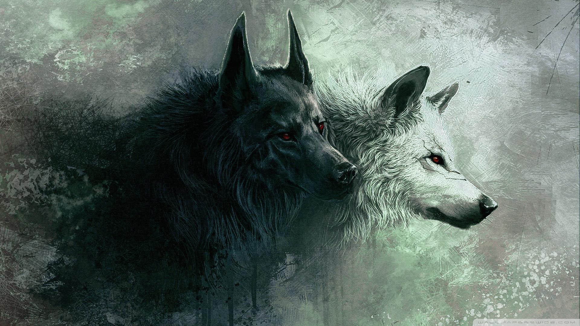 Wolf Hd Wallpaper Background Image 1920x1080 Id 506760